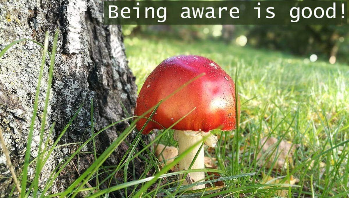 b-light-organic-clothing-poison-mushroom-1