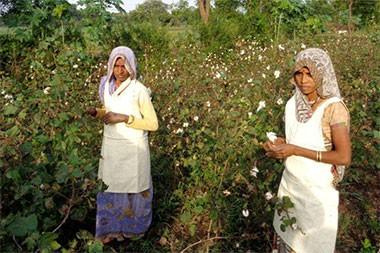 b-light-organic-clothing-cotton-women-2